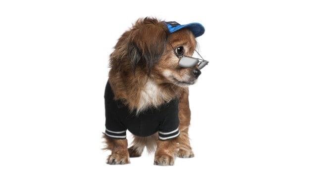 Pes v triku s brýlemi a čepicí